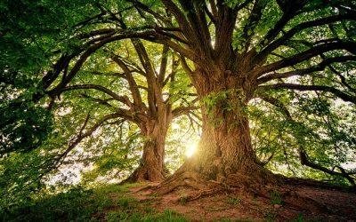 La saggezza dell'albero
