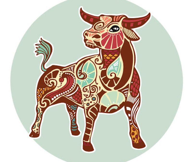 La calma e la dedizione del Toro